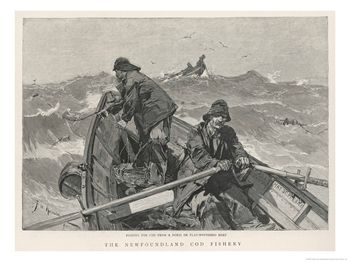 The Newfoundland Cod Fishery