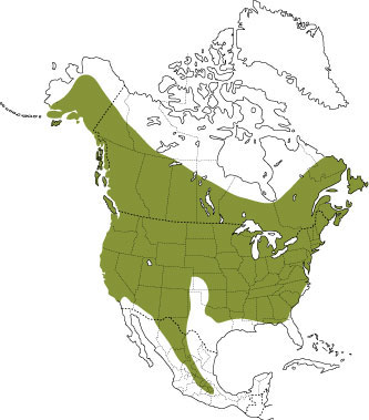 Distribution of the little brown bat