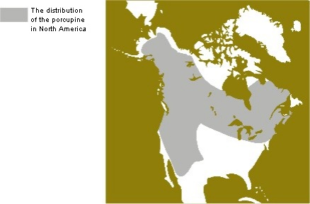 Distribution of the Porcupine