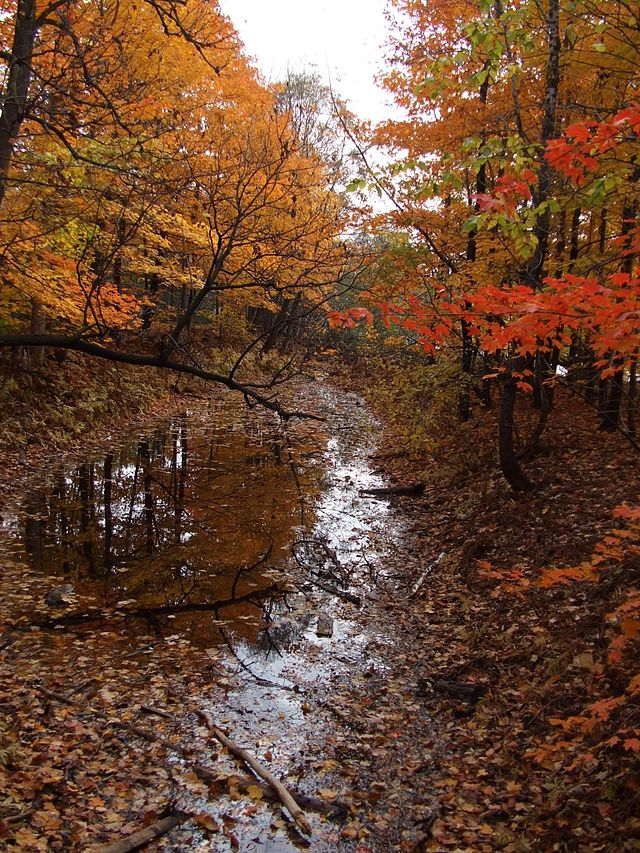 Mixed woods forest in the fall