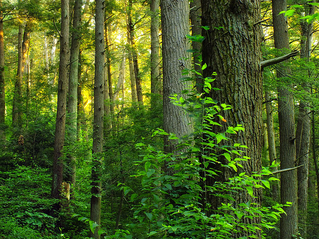 Mixed woods forest