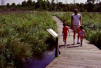Family walking through Marsh lands on boardwalk