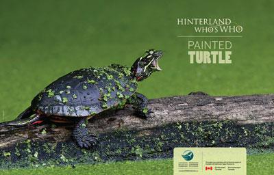 stuff-to-do-turtles