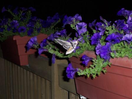 moth-aug-07-2