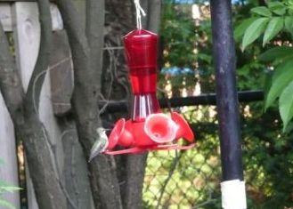 Various-hummingbird-005