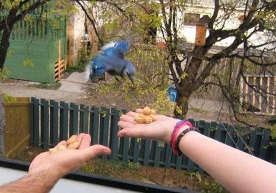 bluebird-lydia