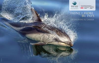 Trucs à faire dauphin