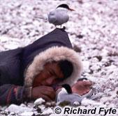 Enfant inuit et Sternes arctiques