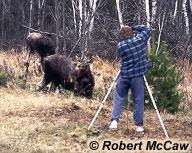 Homme prenant une photo d'un orignal