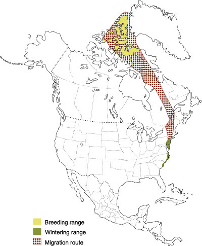 Distribution of the Greater Snow Goose