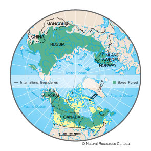 The world's boreal forests