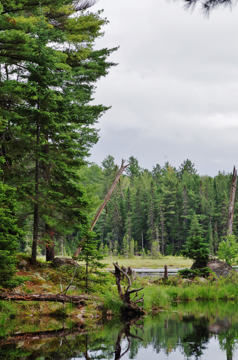 Boreal forest wetland