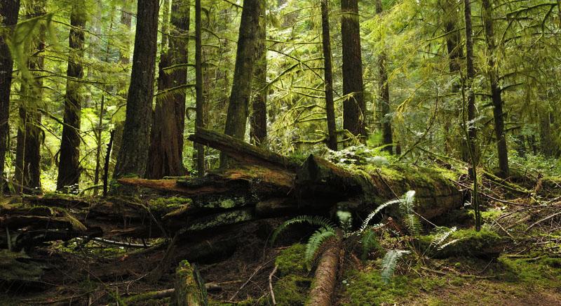 La forêt pluviale