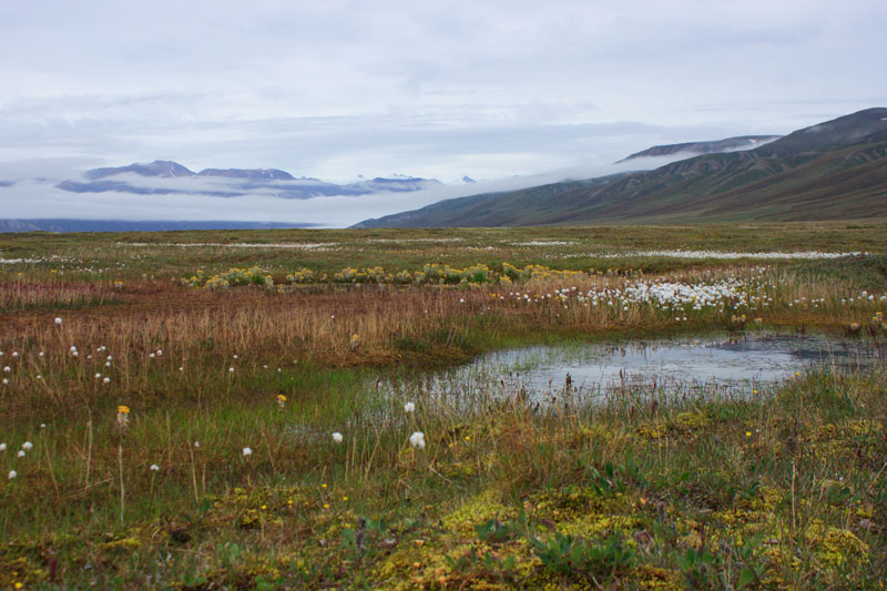 Tundra Field in Nunavut