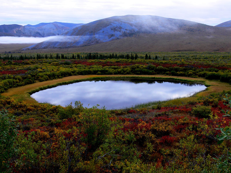 Tundra in Yukon