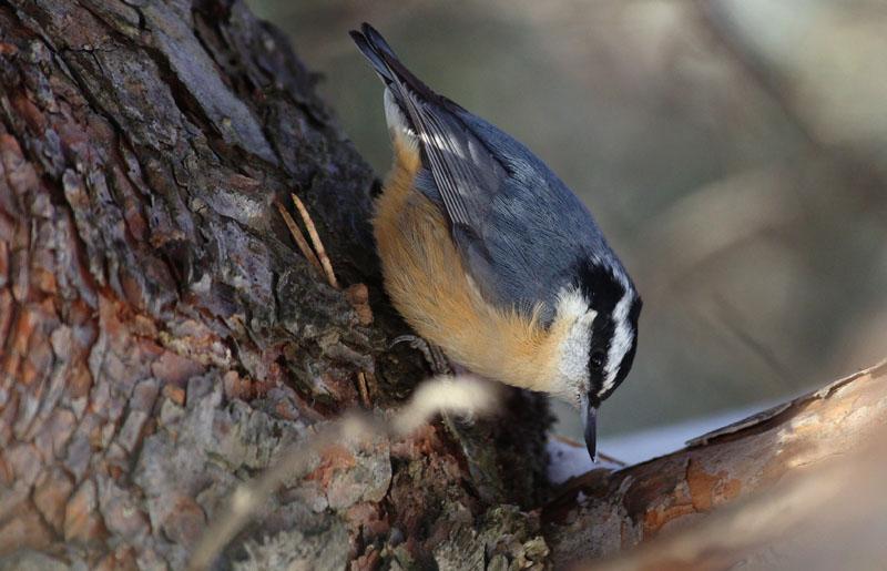En bois naturel fait à la main Nichoir et nestbox-ONU peint-Non toxique-Bird Bo